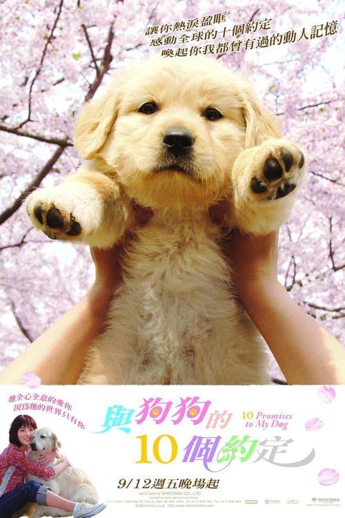 ดูหนังออนไลน์ 10 Promises to My Dog (2008) 10 ข้อสัญญาน้องหมาของฉัน