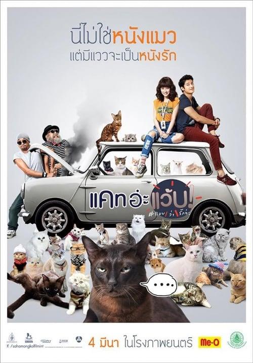 ดูหนังออนไลน์ฟรี Cat A Wabb (2015) แคท อ่ะ แว้บ แบบว่ารักอ่ะ